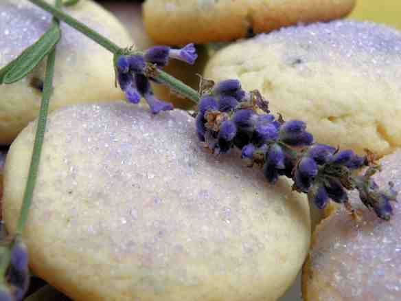 Lavender flowers add a unique fragrance to these Sugar Cookies ...